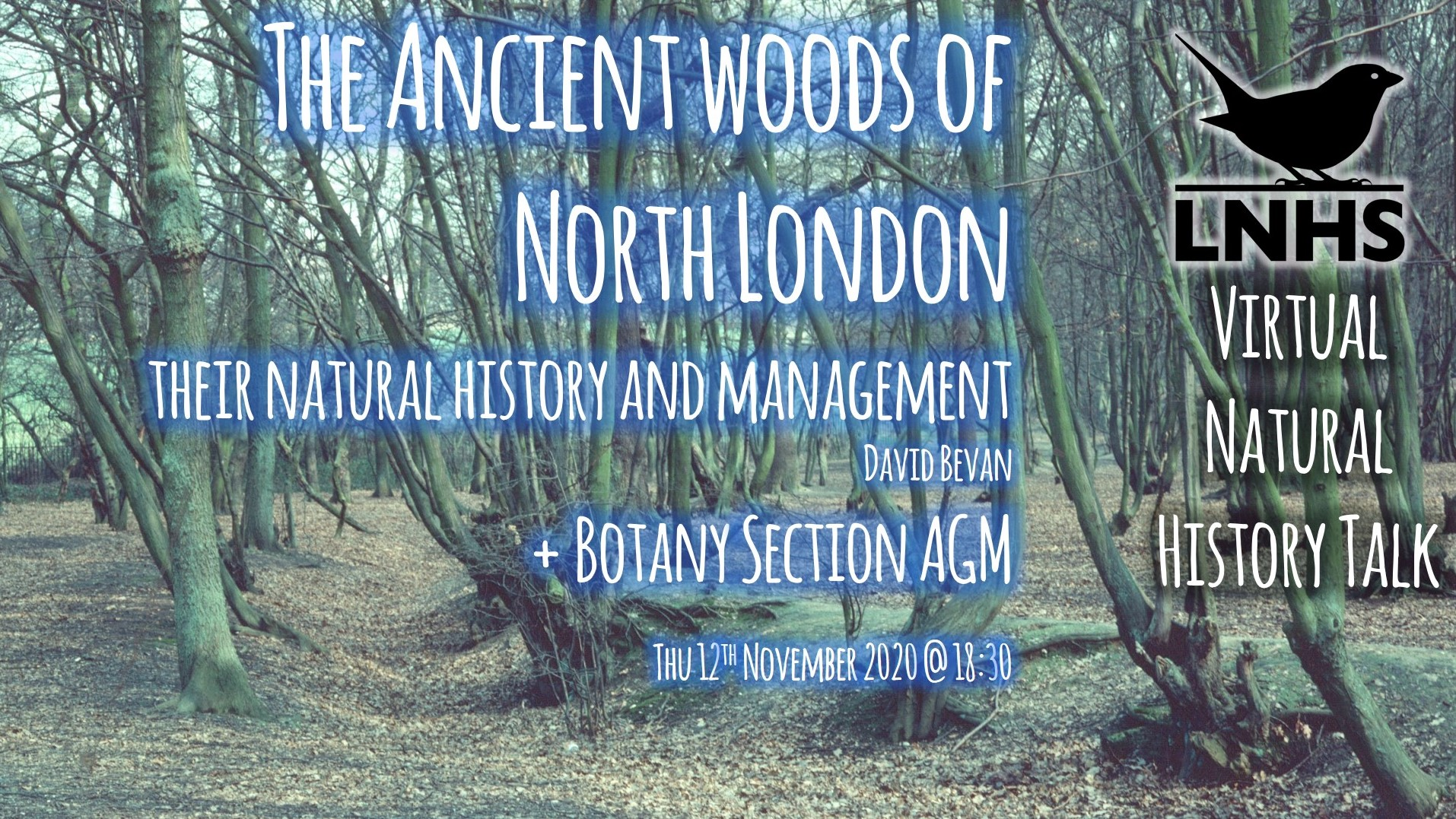 Ancient Woods of North London AD