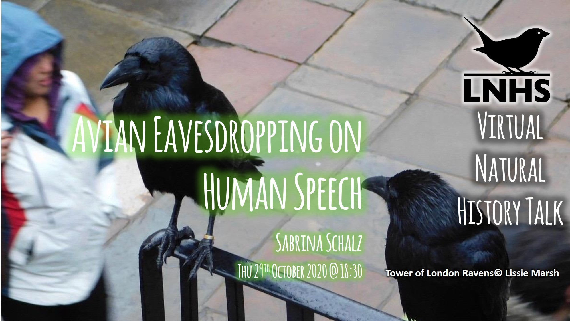 Avian Eavesdropping on Human Speech