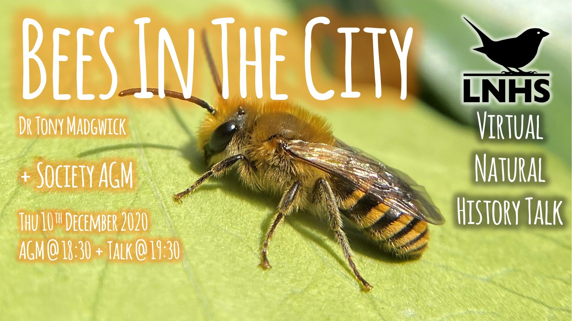 Bees in the City AD