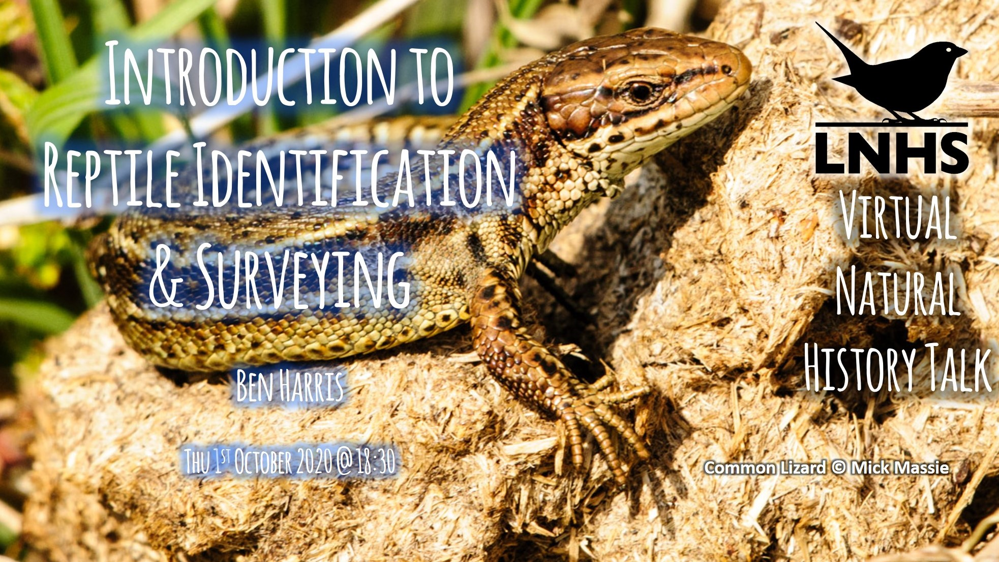 Intro to Reptile ID Surveying AD