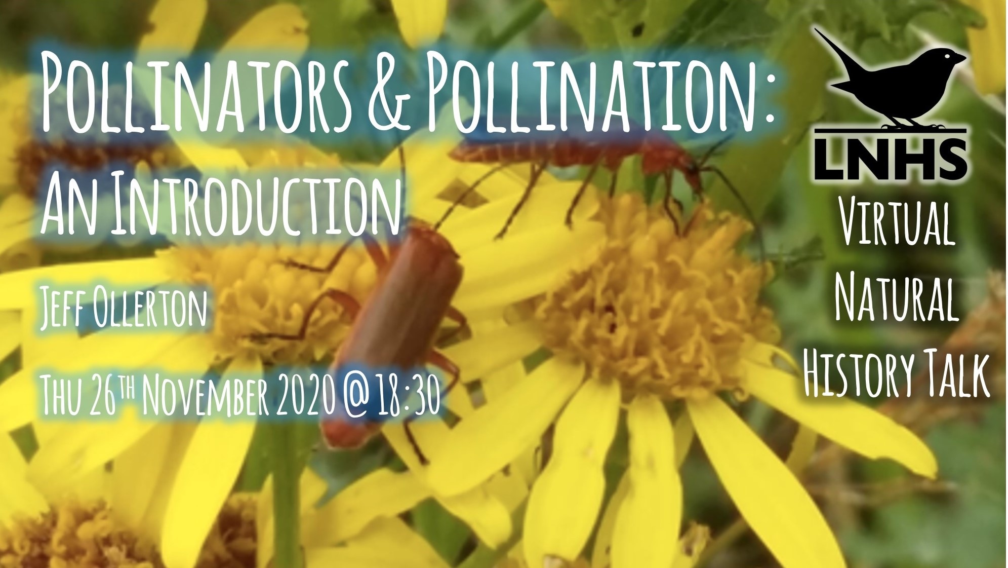 Pollinators Pollination AD