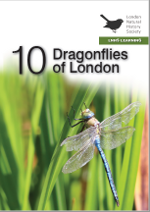 10 Dragonflies in London