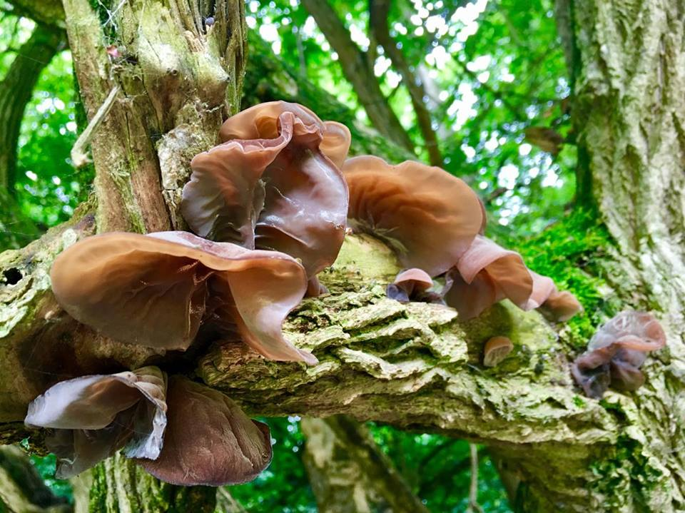Fungus on Hampstead Heath c Douglas Nunes
